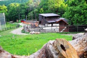 cabana zivoranu buzau ferma animale